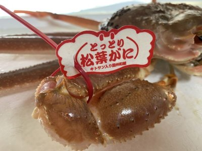 画像1: 最高級松葉ガニ・若松葉ガニセット【松葉ガニ(中・1枚)&若松葉ガニ(中・3枚)】