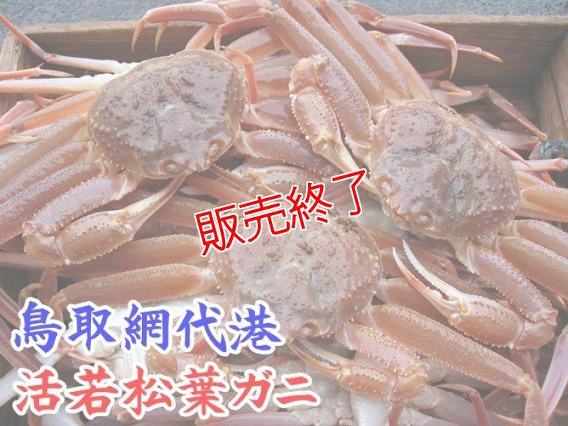 画像1: 活若松葉ガニ【中・5枚】 (1)