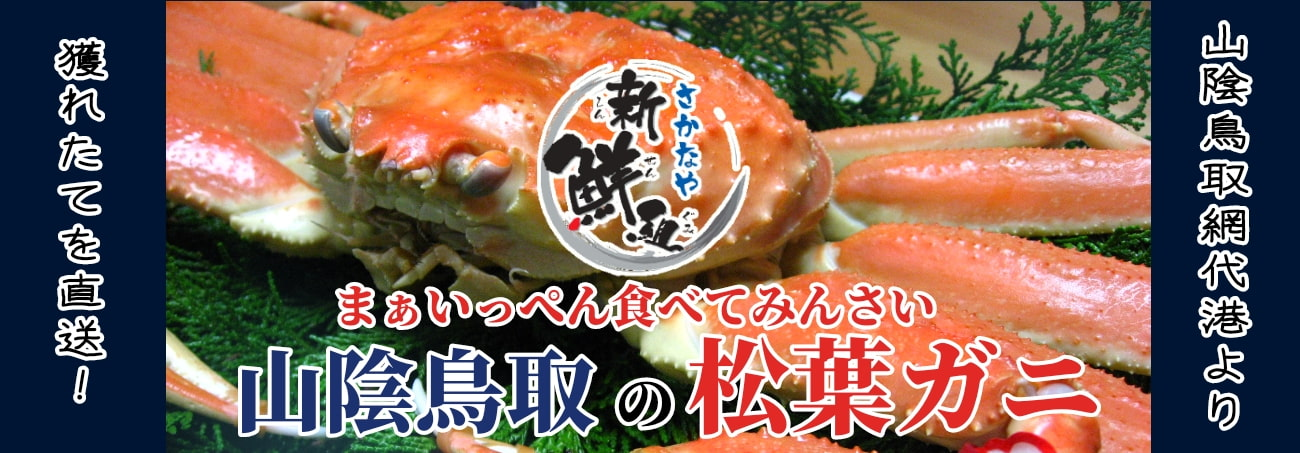 山陰鳥取網代港より獲れたてを直送!まぁいっぺん食べてみんさい 山陰鳥取の松葉ガニ