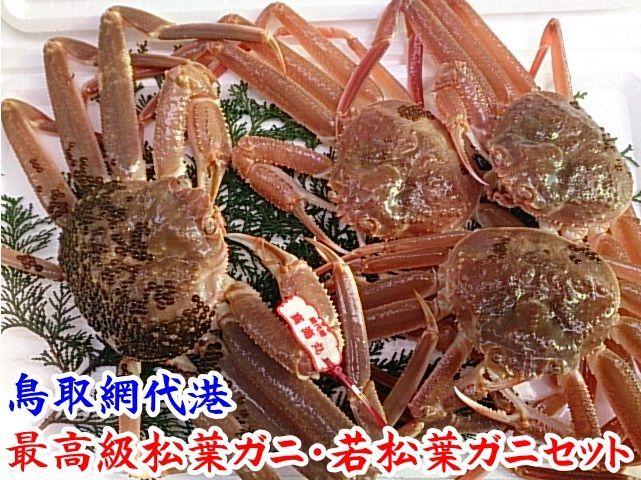 画像1: 最高級松葉ガニ・若松葉ガニセット【松葉ガニ(大・1枚)&若松葉ガニ(中・3枚)】 (1)