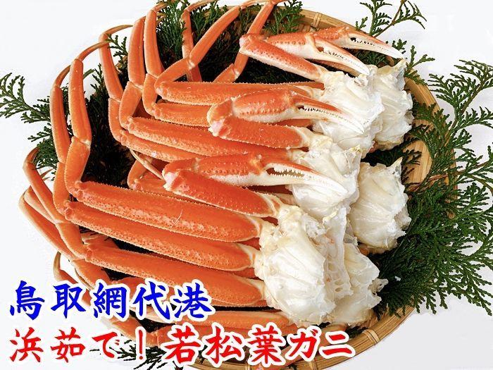 画像1: 浜茹で!若松葉ガニ【中・5枚10肩】 (1)